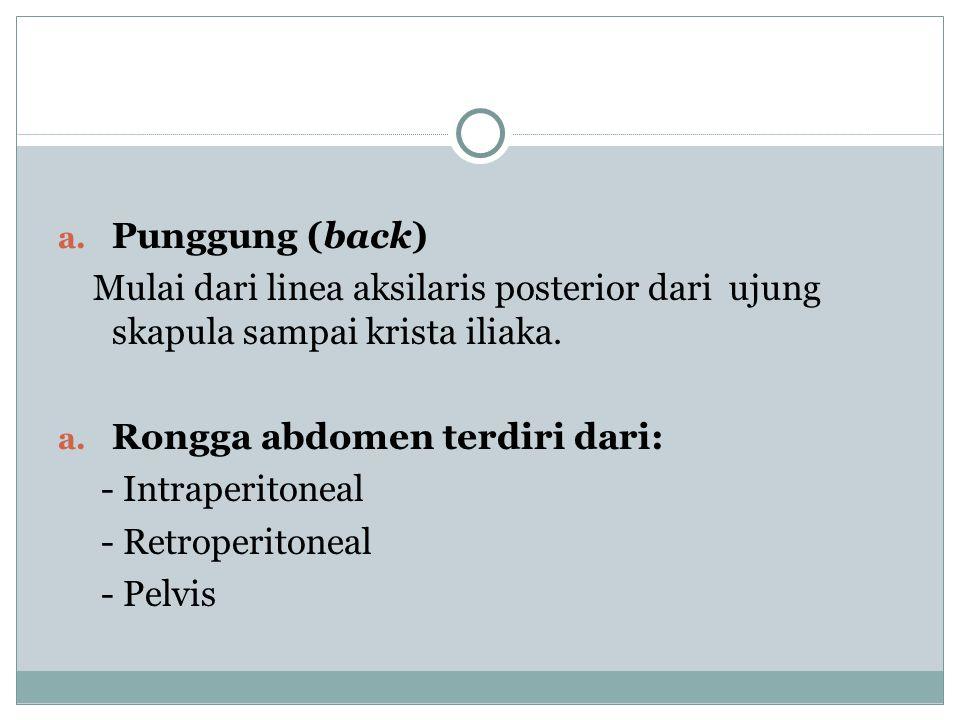 Punggung (back) Mulai dari linea aksilaris posterior dari ujung skapula sampai krista iliaka. Rongga abdomen terdiri dari: