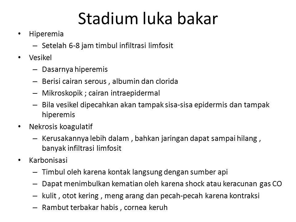 Stadium luka bakar Hiperemia