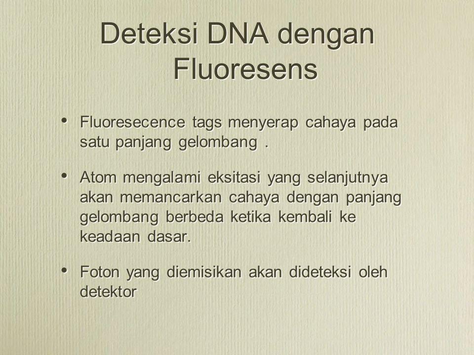 Deteksi DNA dengan Fluoresens