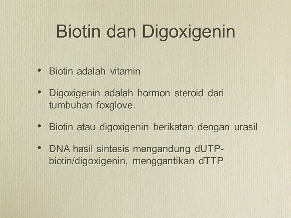 Biotin dan Digoxigenin