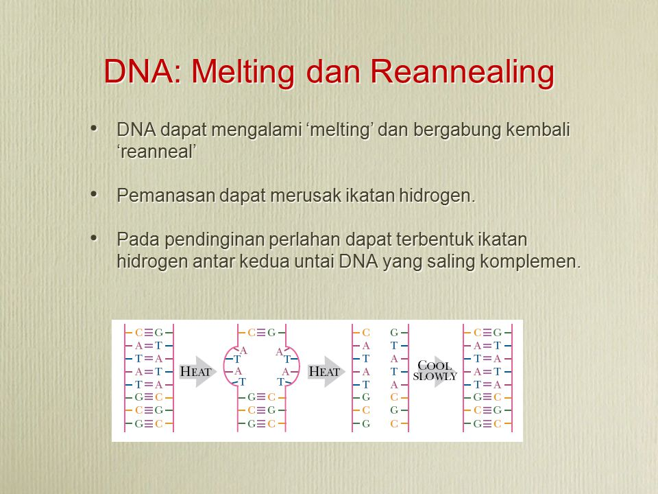 DNA: Melting dan Reannealing