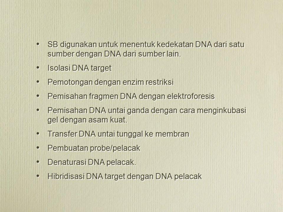 SB digunakan untuk menentuk kedekatan DNA dari satu sumber dengan DNA dari sumber lain.