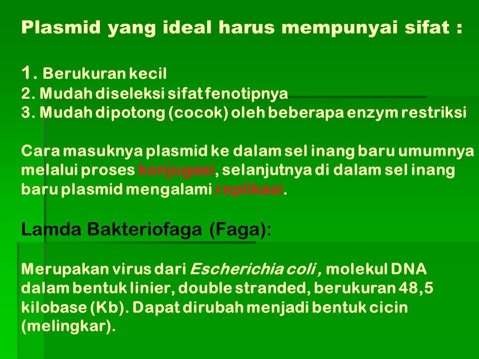 Plasmid yang ideal harus mempunyai sifat : 1. Berukuran kecil 2