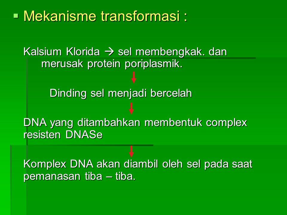 Mekanisme transformasi :