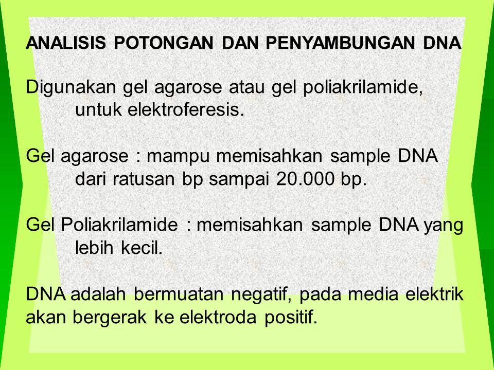 Digunakan gel agarose atau gel poliakrilamide, untuk elektroferesis.