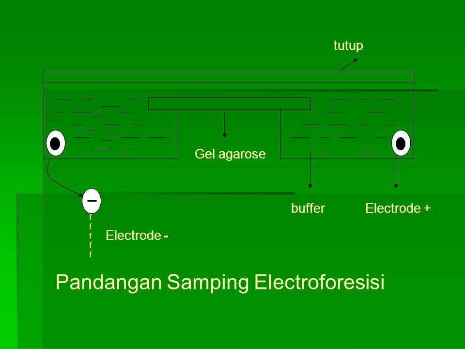 Pandangan Samping Electroforesisi