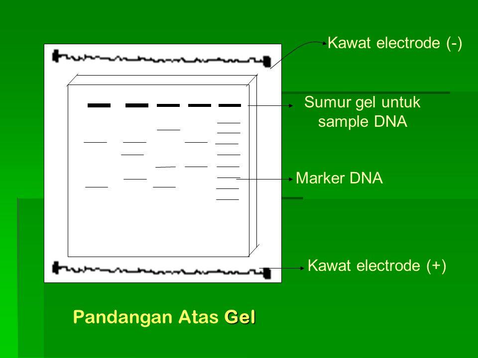 Sumur gel untuk sample DNA
