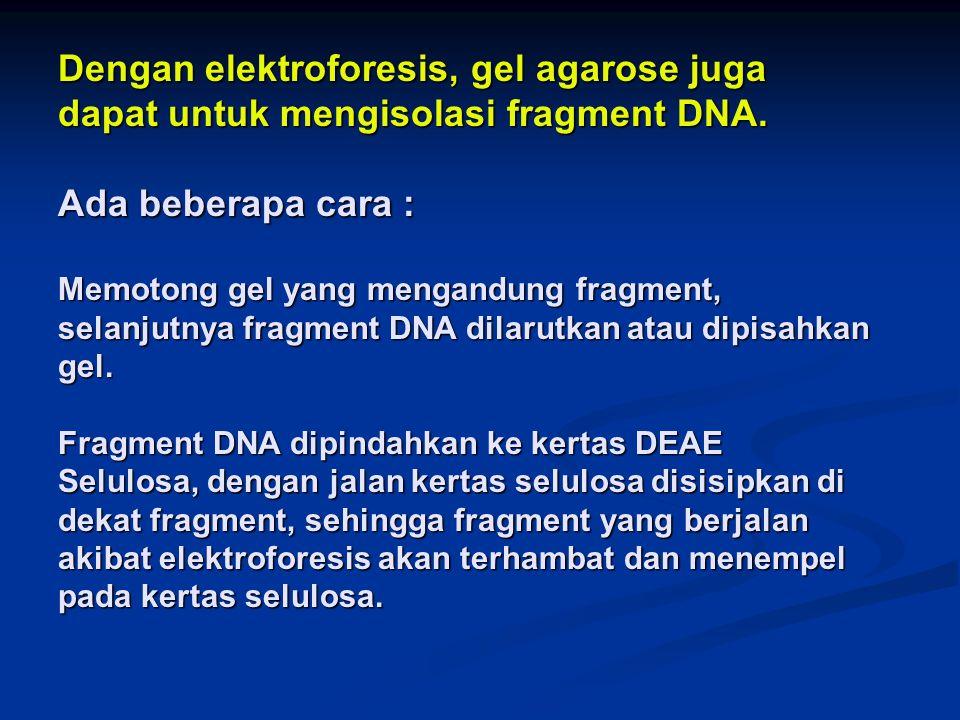 Dengan elektroforesis, gel agarose juga dapat untuk mengisolasi fragment DNA.