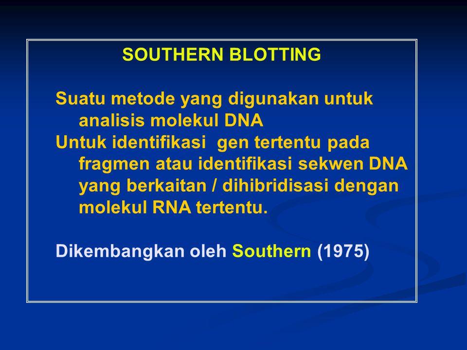 SOUTHERN BLOTTING Suatu metode yang digunakan untuk analisis molekul DNA.
