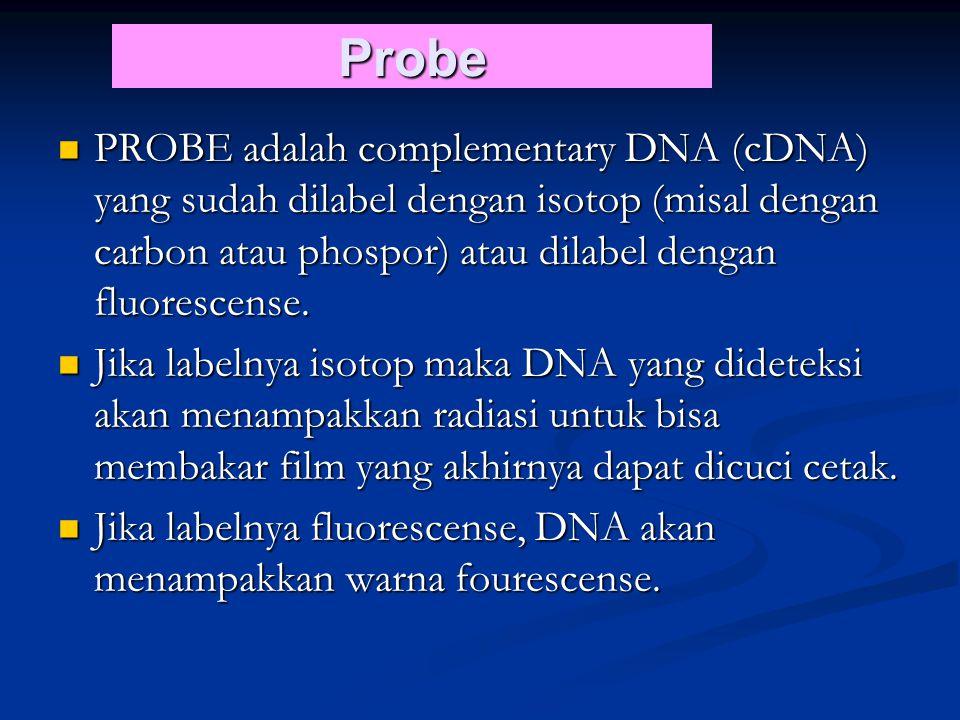 Probe PROBE adalah complementary DNA (cDNA) yang sudah dilabel dengan isotop (misal dengan carbon atau phospor) atau dilabel dengan fluorescense.