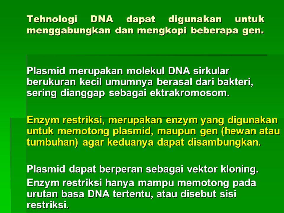 Plasmid dapat berperan sebagai vektor kloning.