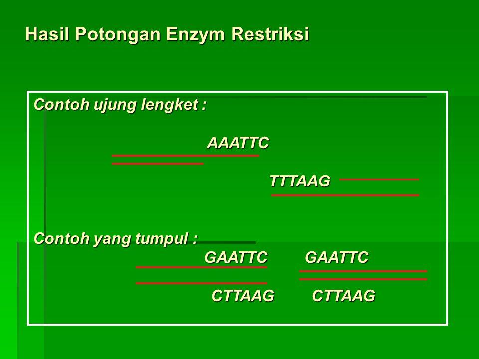 Hasil Potongan Enzym Restriksi