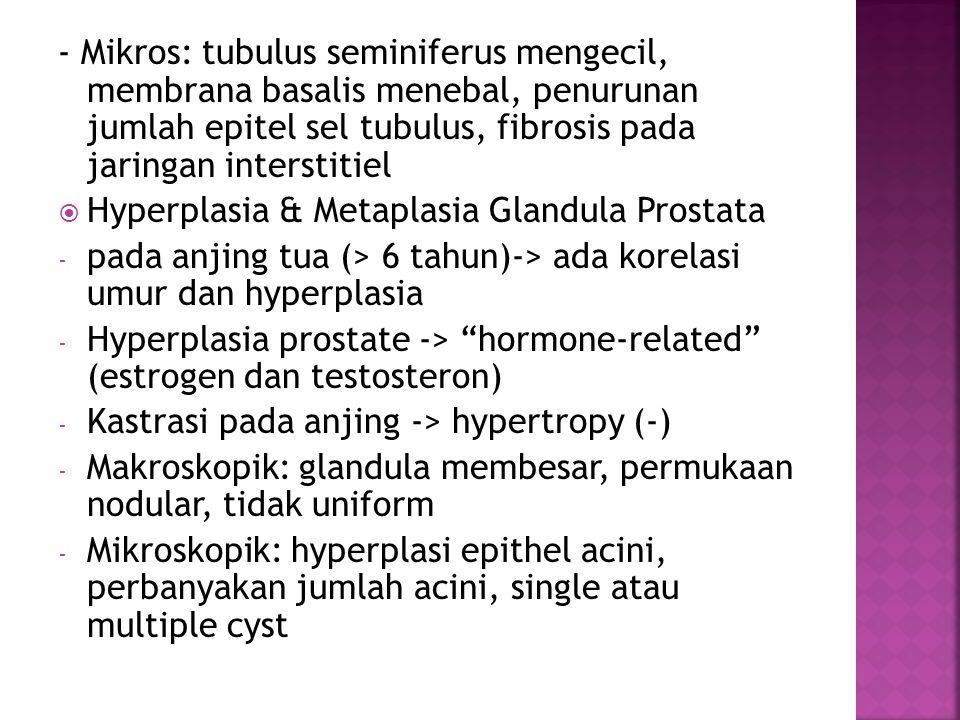 - Mikros: tubulus seminiferus mengecil, membrana basalis menebal, penurunan jumlah epitel sel tubulus, fibrosis pada jaringan interstitiel