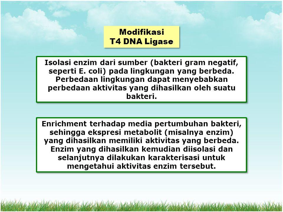 Modifikasi T4 DNA Ligase