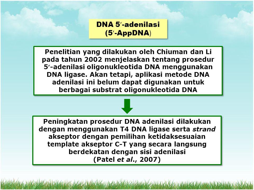 DNA 5-adenilasi (5-AppDNA)