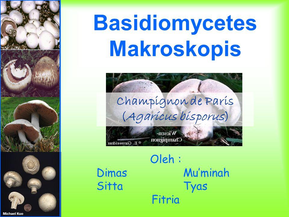Basidiomycetes Makroskopis