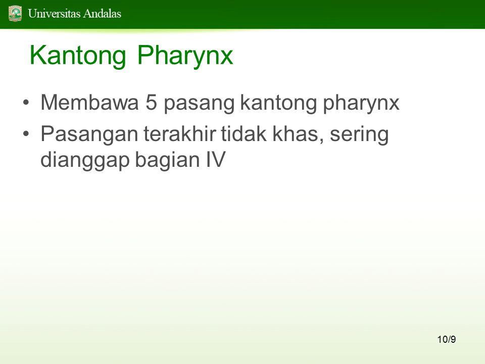 Kantong Pharynx Membawa 5 pasang kantong pharynx