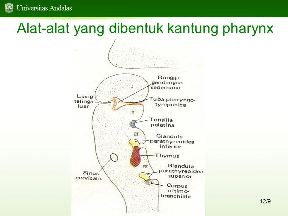 Alat-alat yang dibentuk kantung pharynx