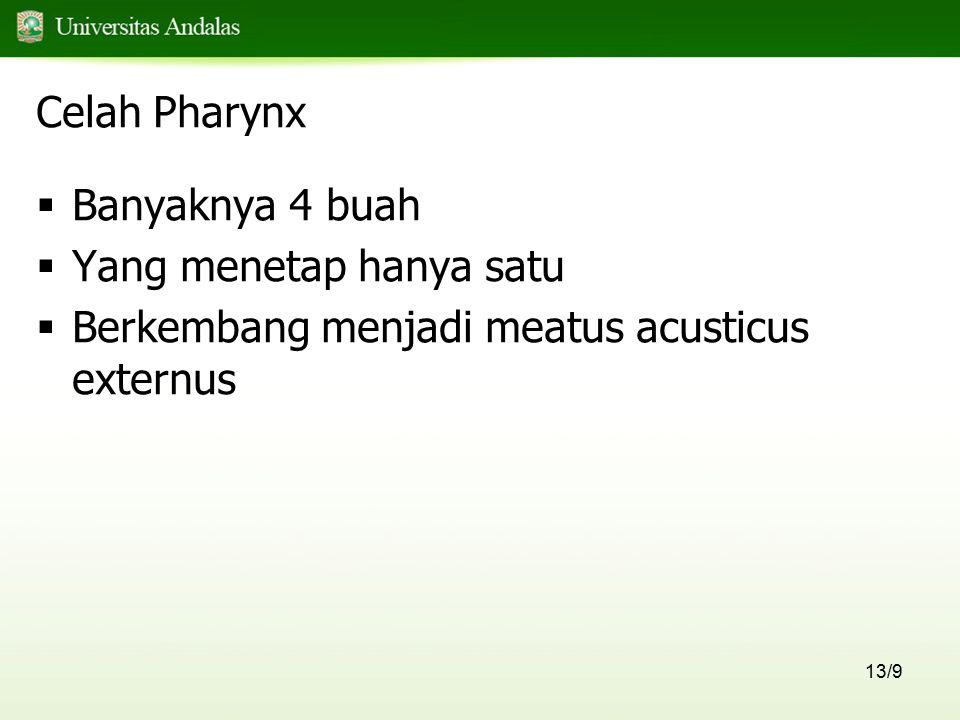 Celah Pharynx Banyaknya 4 buah Yang menetap hanya satu Berkembang menjadi meatus acusticus externus