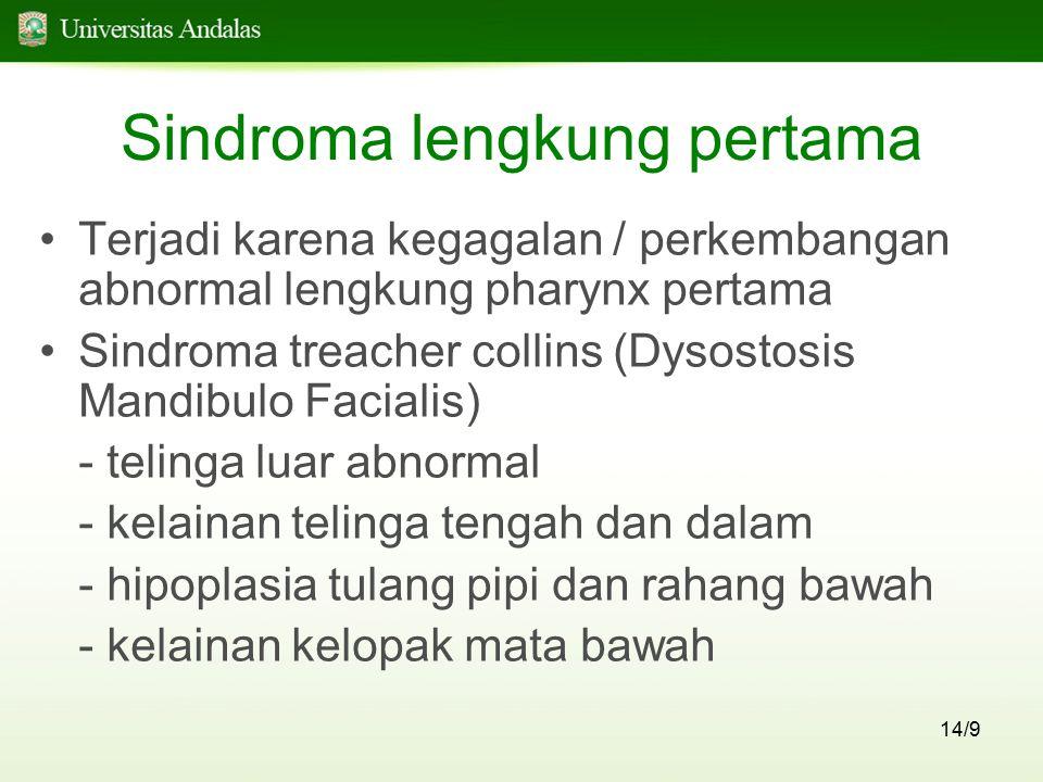 Sindroma lengkung pertama