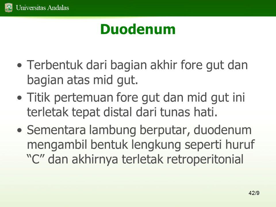 Duodenum Terbentuk dari bagian akhir fore gut dan bagian atas mid gut.