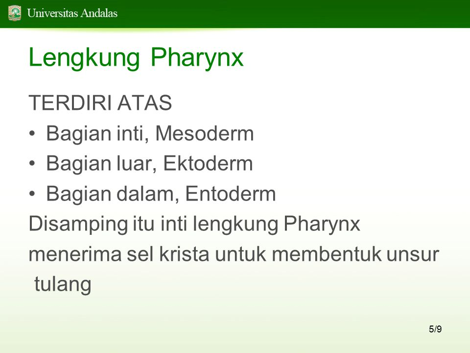 Lengkung Pharynx TERDIRI ATAS Bagian inti, Mesoderm