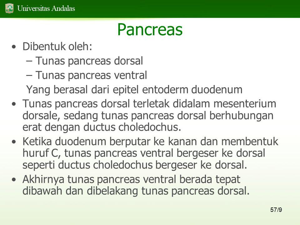 Pancreas Dibentuk oleh: Tunas pancreas dorsal Tunas pancreas ventral