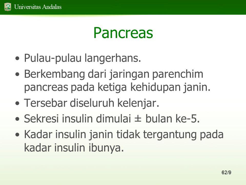 Pancreas Pulau-pulau langerhans.