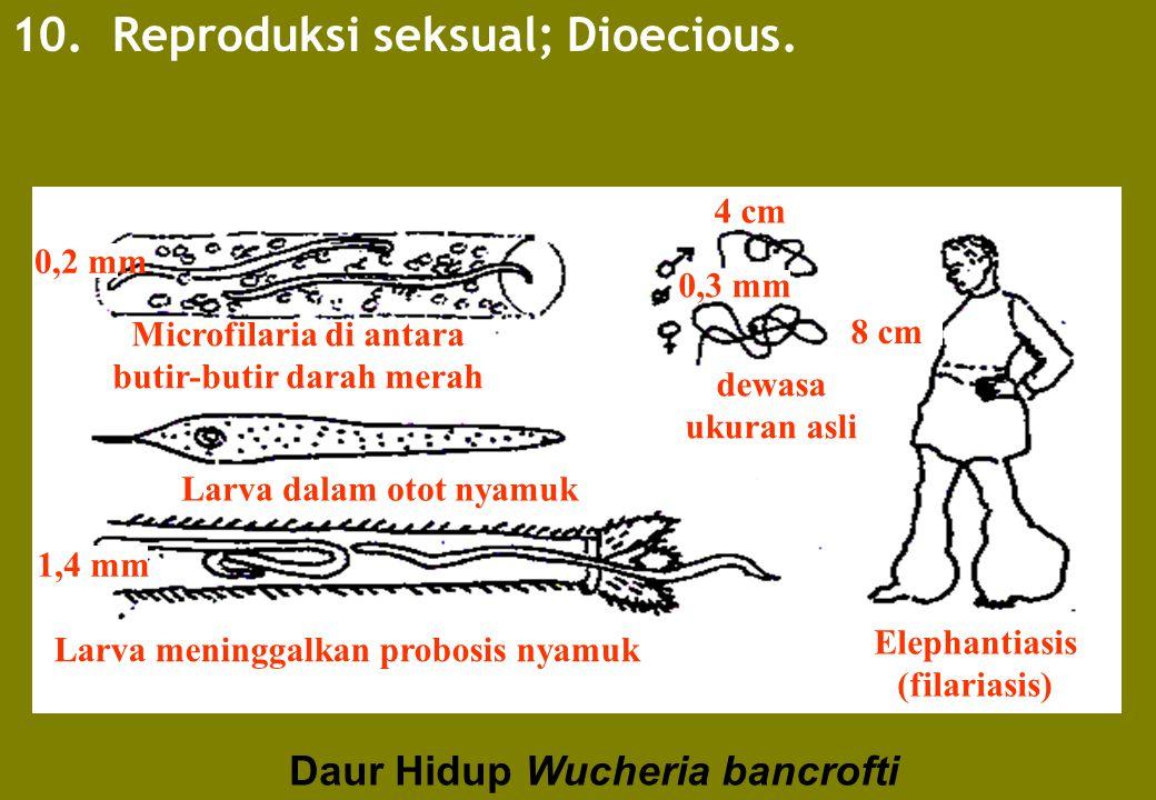 10. Reproduksi seksual; Dioecious.