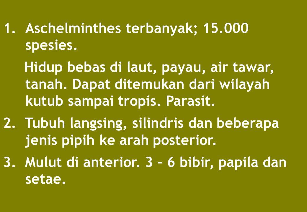 Aschelminthes terbanyak; 15.000 spesies.