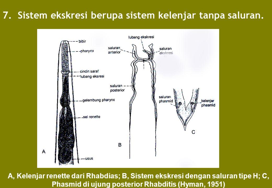 7. Sistem ekskresi berupa sistem kelenjar tanpa saluran.