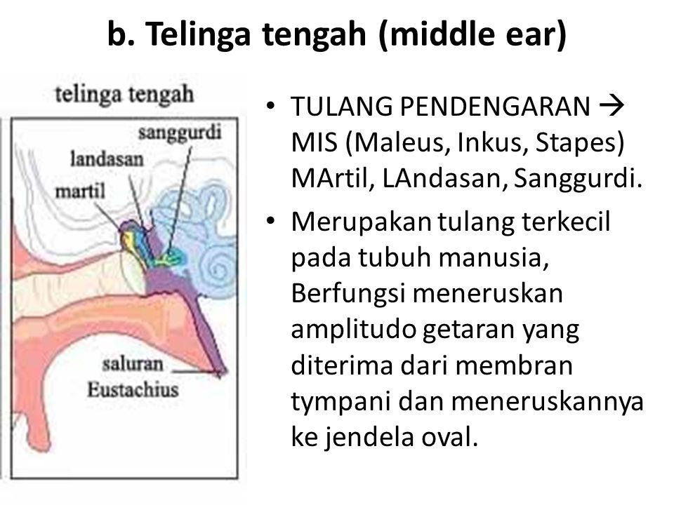b. Telinga tengah (middle ear)