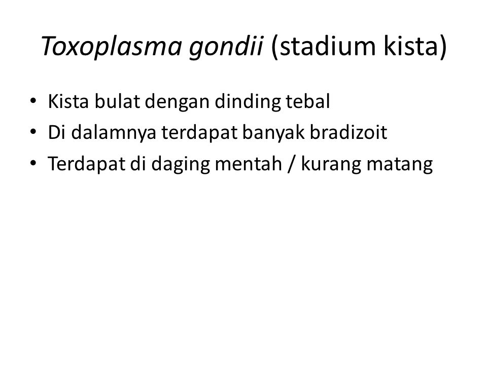 Toxoplasma gondii (stadium kista)