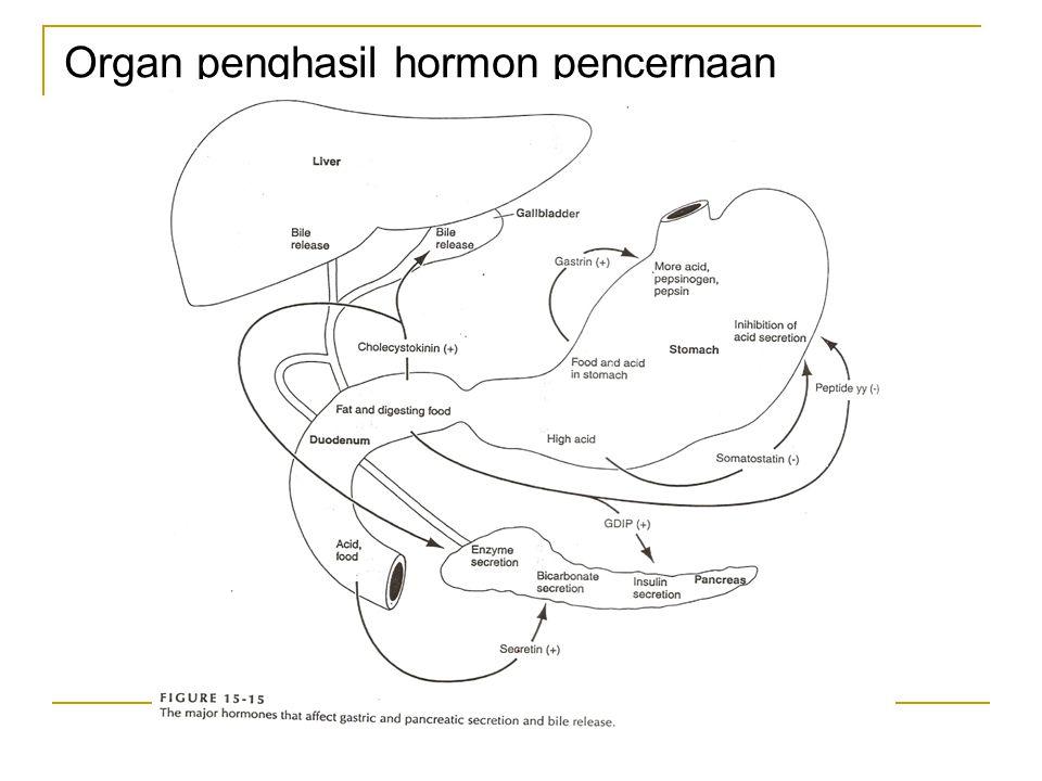 Organ penghasil hormon pencernaan