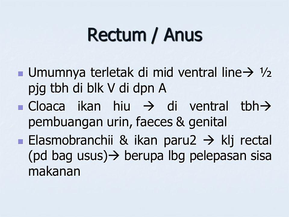 Rectum / Anus Umumnya terletak di mid ventral line ½ pjg tbh di blk V di dpn A. Cloaca ikan hiu  di ventral tbh pembuangan urin, faeces & genital.
