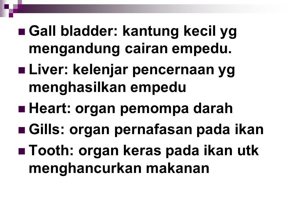 Gall bladder: kantung kecil yg mengandung cairan empedu.