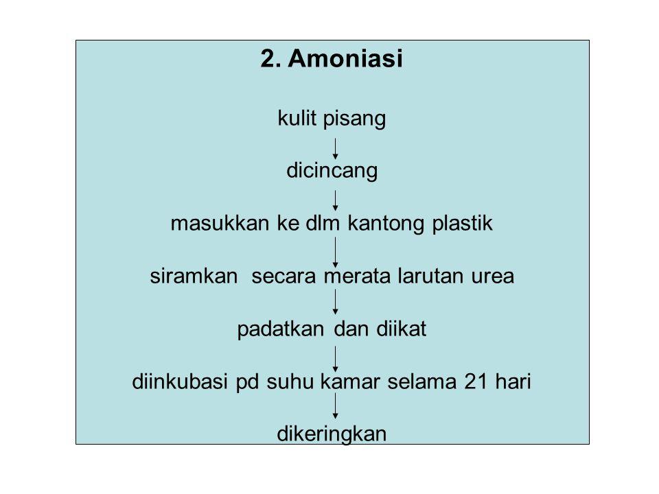 2. Amoniasi kulit pisang dicincang masukkan ke dlm kantong plastik