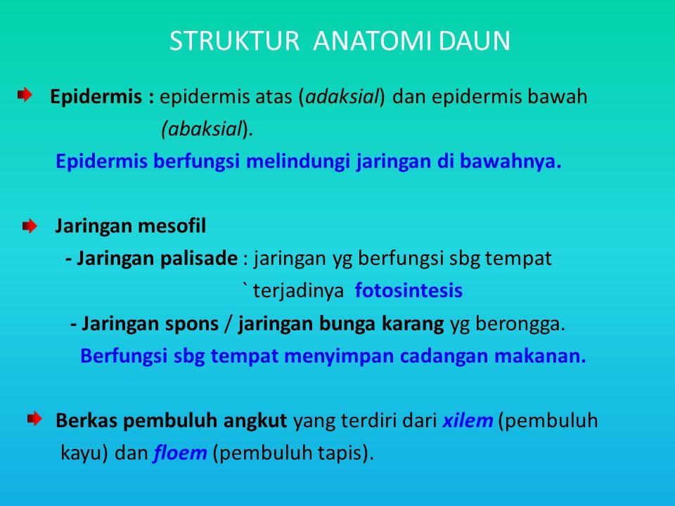 STRUKTUR ANATOMI DAUN Epidermis : epidermis atas (adaksial) dan epidermis bawah. (abaksial). Epidermis berfungsi melindungi jaringan di bawahnya.