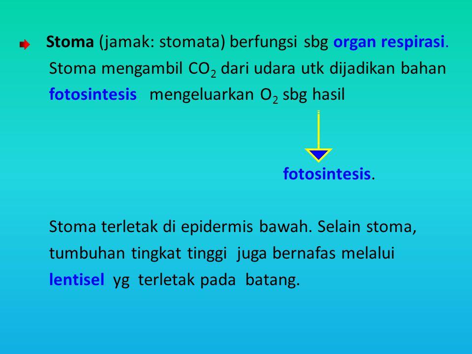 Stoma mengambil CO2 dari udara utk dijadikan bahan