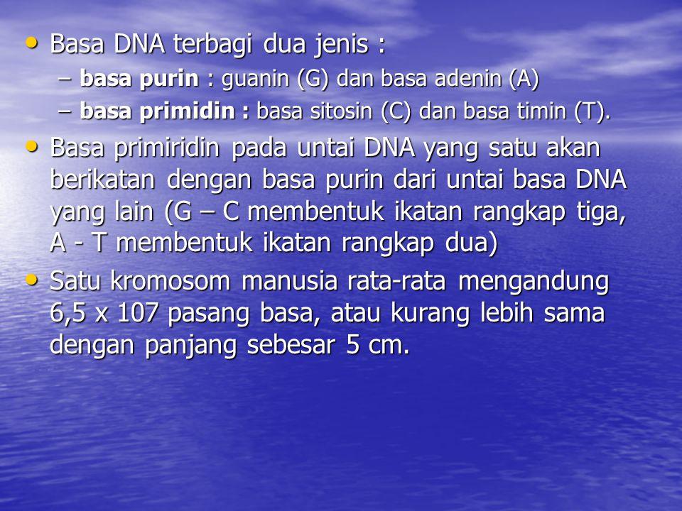 Basa DNA terbagi dua jenis :