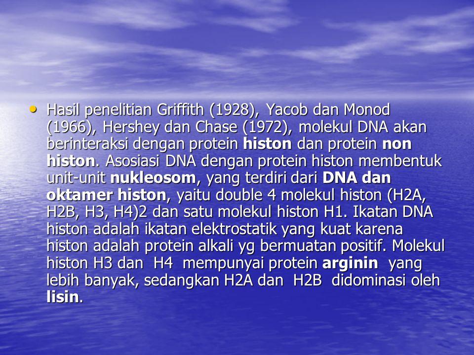 Hasil penelitian Griffith (1928), Yacob dan Monod (1966), Hershey dan Chase (1972), molekul DNA akan berinteraksi dengan protein histon dan protein non histon.