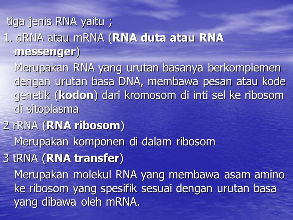 tiga jenis RNA yaitu ; 1. dRNA atau mRNA (RNA duta atau RNA messenger)