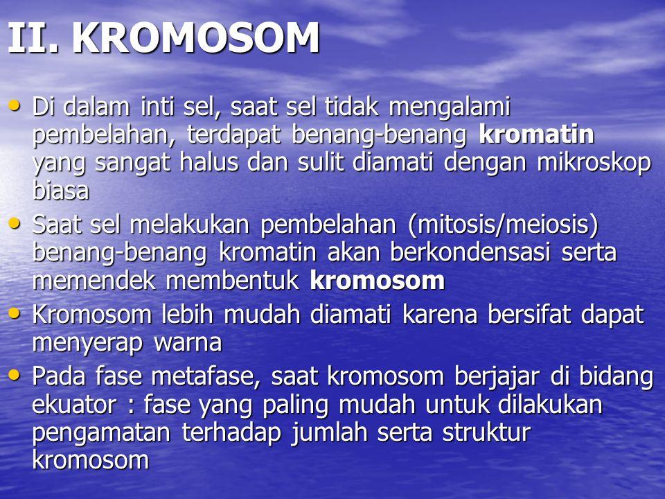 II. KROMOSOM
