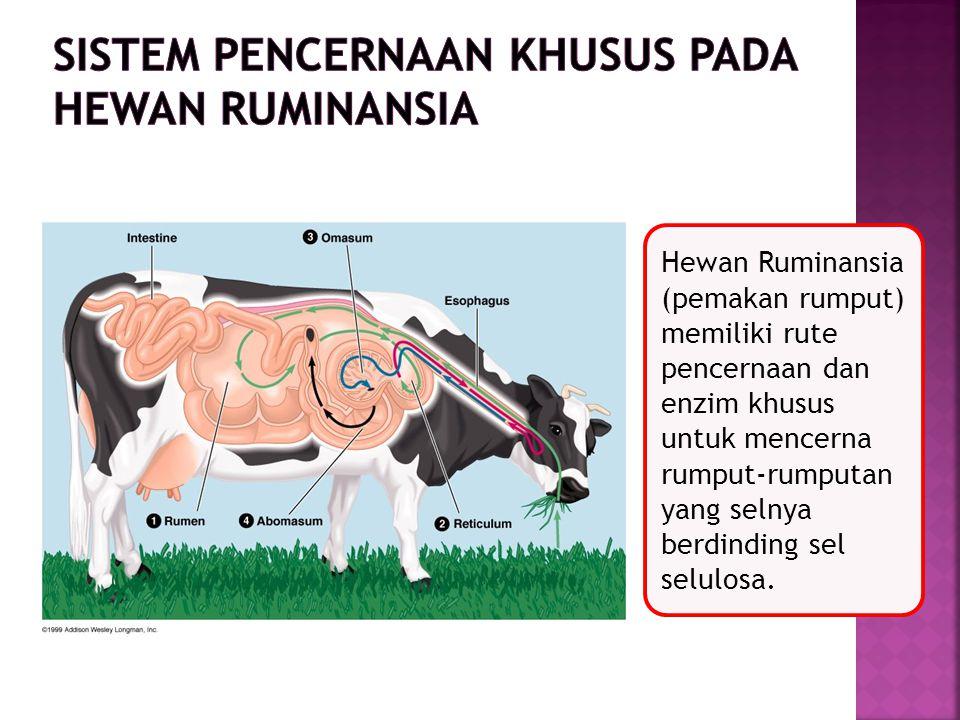 Sistem Pencernaan Khusus pada hewan Ruminansia