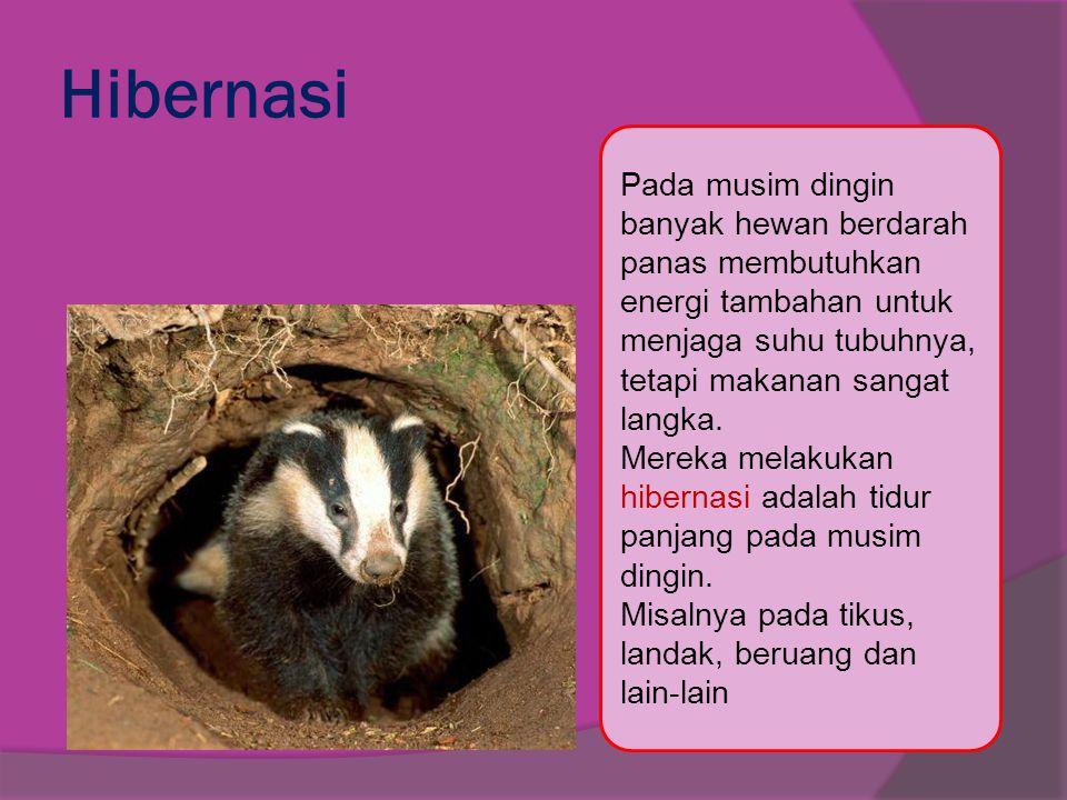 Hibernasi Pada musim dingin banyak hewan berdarah panas membutuhkan energi tambahan untuk. menjaga suhu tubuhnya, tetapi makanan sangat langka.