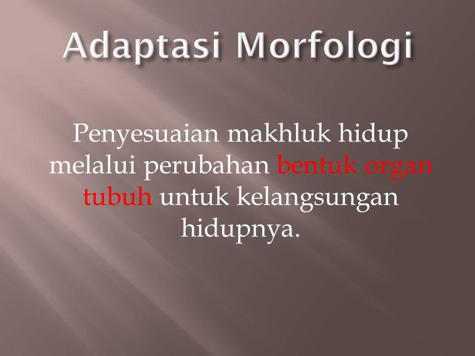 Adaptasi Morfologi Penyesuaian makhluk hidup melalui perubahan bentuk organ tubuh untuk kelangsungan hidupnya.