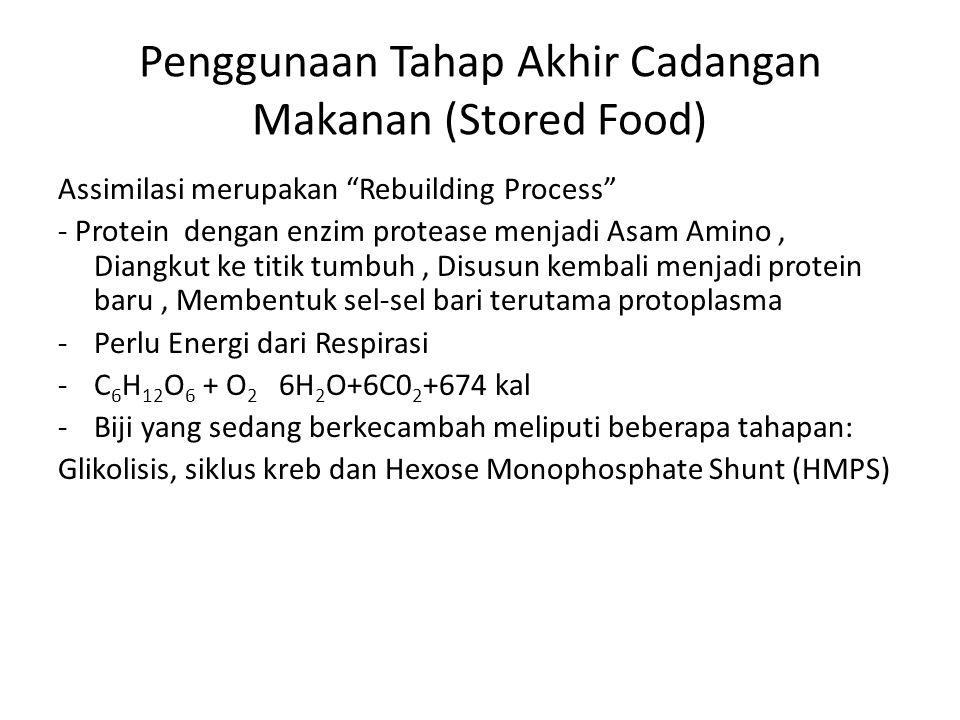 Penggunaan Tahap Akhir Cadangan Makanan (Stored Food)