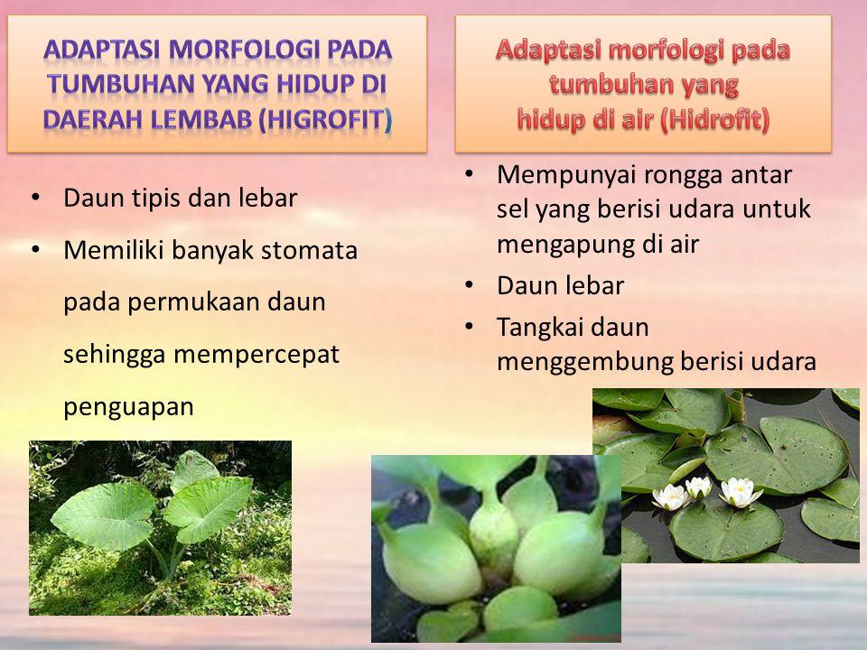 Adaptasi morfologi pada tumbuhan yang hidup di air (Hidrofit)