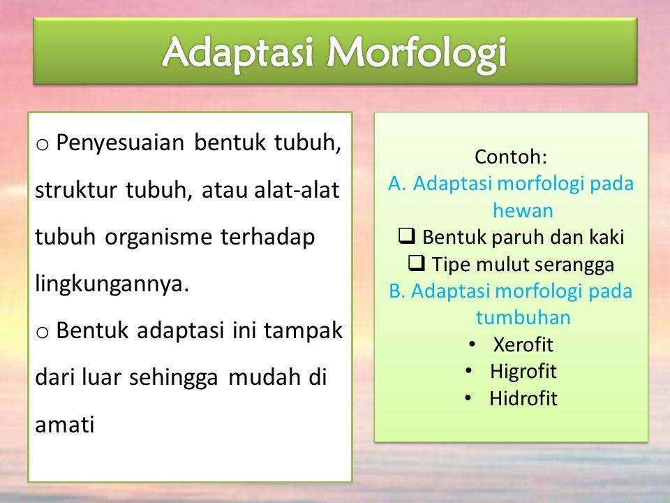 Adaptasi Morfologi Penyesuaian bentuk tubuh, struktur tubuh, atau alat-alat tubuh organisme terhadap lingkungannya.