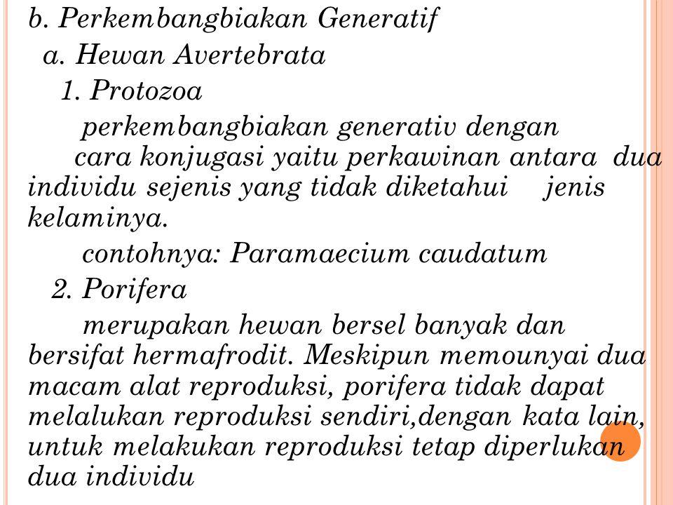 contohnya: Paramaecium caudatum 2. Porifera
